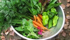 Jizaiで採れた野菜(Jizai)