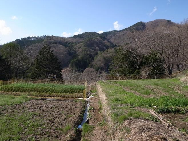 田んぼの季節(Jizai)
