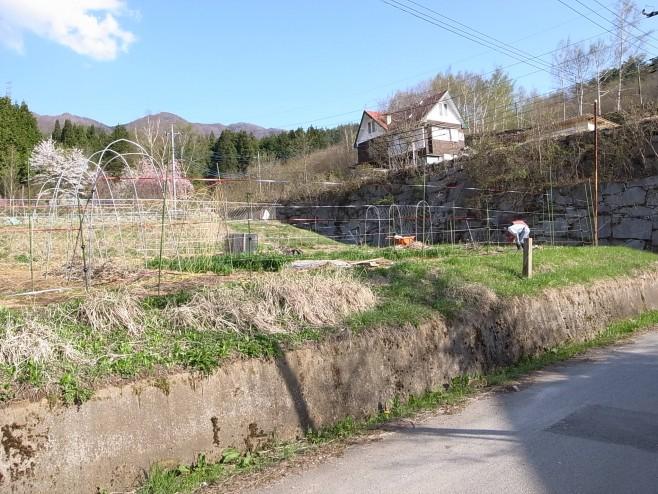 春の畑(Jizai)